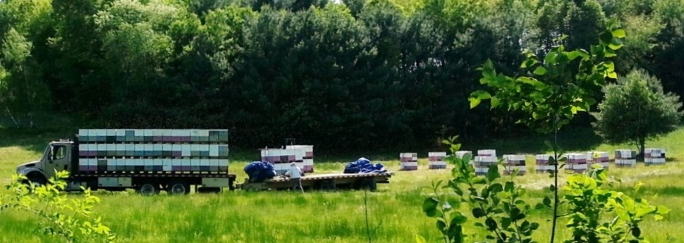 Unloading bees at our homeyard in Holliston