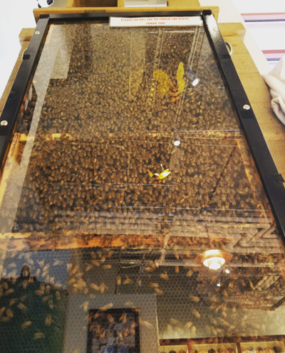 observation hive at the retail store