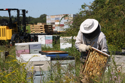 Our apiary - Boston Honey Company
